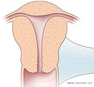 kvinnelig kjønnsorgan anatomi vondt øverst i magen